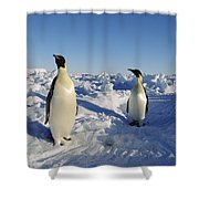 Emperor Penguin Trio On Ice Field Shower Curtain