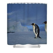 Emperor Penguins At Midnight Antarctica Shower Curtain