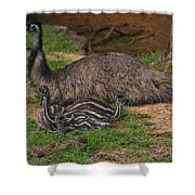 Emu And Chicks Shower Curtain