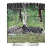 Emu Birds Shower Curtain