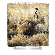 Emu Chicks Shower Curtain by Tim Hester