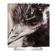 Emu Closeup Shower Curtain by Karol Livote