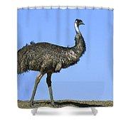Emu Portrait Sturt National Park Shower Curtain