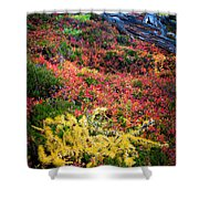 Enchanted Colors Shower Curtain