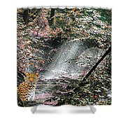 Enchanted Forest - Featured In Wildlife Group Shower Curtain
