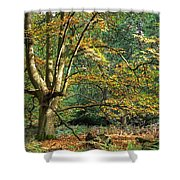 Enchanted Forest Tree Shower Curtain