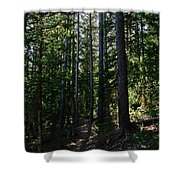 Enchanted Trail Shower Curtain
