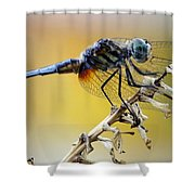 Enchanting Dragonfly Shower Curtain