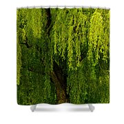 Enchanting Weeping Willow Tree Wall Art Shower Curtain
