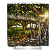 Enchantment Shower Curtain by Debra and Dave Vanderlaan