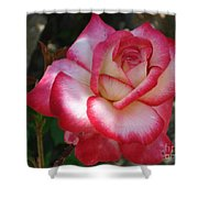 End Of June Bloom Shower Curtain