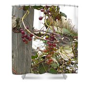 End Of Season Grapes Shower Curtain