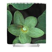 Endangered Flora Shower Curtain