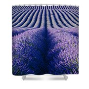 Endless Rows Shower Curtain