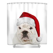 English Bulldog In Christmas Hat Shower Curtain