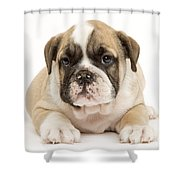 English Bulldog Puppy Shower Curtain