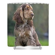 English Cocker Spaniel Dog Shower Curtain