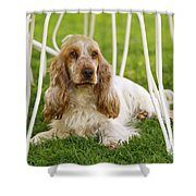 English Cocker Spaniel Shower Curtain