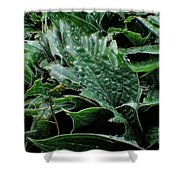 English Country Garden - Series V Shower Curtain by Doc Braham