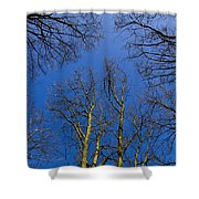 English Forest Trees Shower Curtain