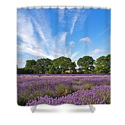 English Lavender Fields In Hampshire Shower Curtain