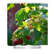 English Raspberries Shower Curtain