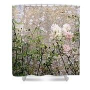 English Roses Iv Shower Curtain