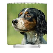 English Setter Dog Shower Curtain