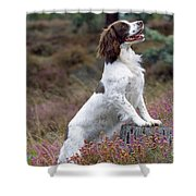 English Springer Spaniel Dog Shower Curtain