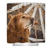 Enjoying The Moment - Golden Retriever - Casper Wyoming Shower Curtain