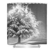 Enlightened Tree Shower Curtain