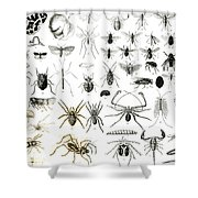 Entomology Myriapoda And Arachnida  Shower Curtain