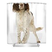 Epagneul Francais Shower Curtain