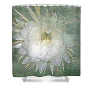 Epiphyllum Oxypetallum - Queen Of The Night Cactus Shower Curtain
