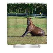 Equestrian Beauty Shower Curtain