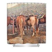 Equine Gossip - Haleakala Shower Curtain