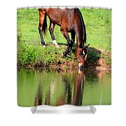Equine Reflections Shower Curtain