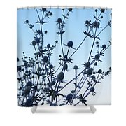 Eryngium Explosion Shower Curtain