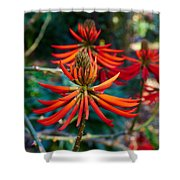 Erythrina Speciosa Shower Curtain