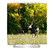 Escape Into The Trees Shower Curtain