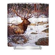 Estes Park Elk Shower Curtain
