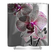 Ethereal Orchid Shower Curtain