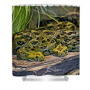 Ethiopian Mountain Vipers Shower Curtain