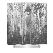 Eucalyptus Forest Shower Curtain