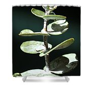 Eucalyptus Tears Shower Curtain