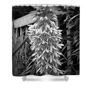 Eucomis Named Bicolor Shower Curtain