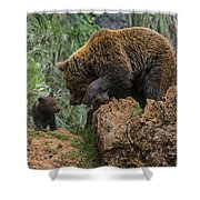 Eurasian Brown Bear 13 Shower Curtain