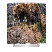 Eurasian Brown Bear 15 Shower Curtain
