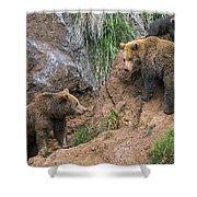 Eurasian Brown Bear 17 Shower Curtain