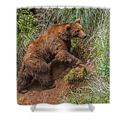 Eurasian Brown Bear 21 Shower Curtain